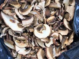 Borovik Mushroom Boletus Edulis