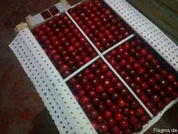 Cherry from sunny Uzbekistan