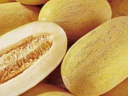 Дыня Торпедо из Узбекистана - Melon from Uzbekistan