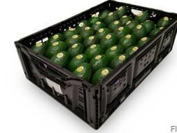 Frische Avocado zu verkaufen