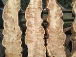 Каповый тополь, Бук, Белый дуб - фото 3
