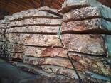Каповый тополь, Бук, Белый дуб - фото 6