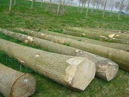 Logs, board from Russia wood