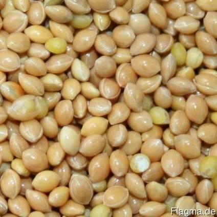 Millet yellow Просо желтое