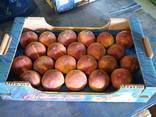 Персики - фото 1