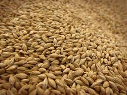 Продаём зерно, ячмень рапс, лён, семечки