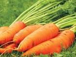 Сушеные овощи и зелень от производителя ! - фото 4
