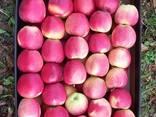 Свежие яблоки, сливы, груши и овощи из Польши - фото 2
