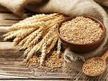 Wheat - фото 1