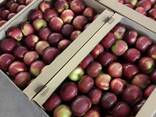 Яблоки - photo 1