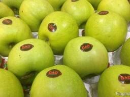 Яблоки прямые поставки. Оптом из Узбекистана